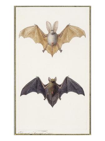 edouard-travies-long-eared-bat-and-a-common-bat-1834