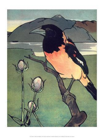 edward-detmold-bird-illustration-the-oriole-1899