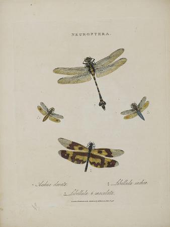 edward-donovan-album-donovan-an-epitome-of-the-natural-history-of-insects-in-china