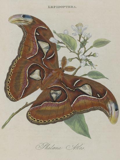 Donovan Epitone Of The Natural History
