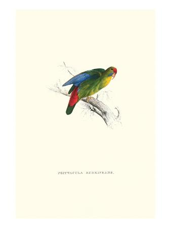edward-lear-red-fronted-parakeet-loriculus-philippinensis