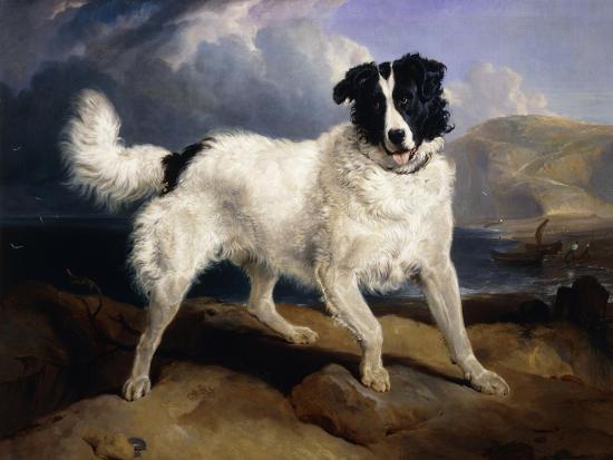 edwin-henry-landseer-a-portrait-of-neptune