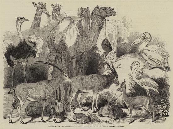 egyptian-animals-presented-by-the-late-ibrahim-pacha-to-the-zoological-society