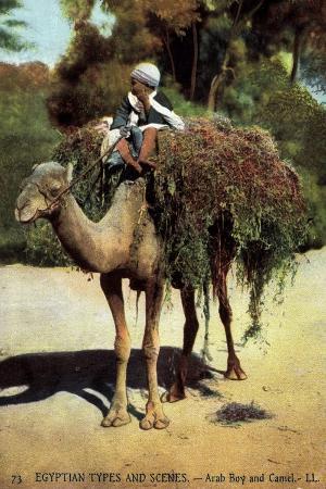 egyptian-types-and-scenes-arab-boy-and-camel-junge-auf-einem-kamel