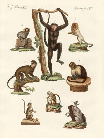 eight-kinds-of-monkeys