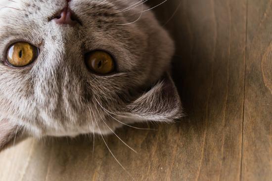 ekaterina-barantceva-interests-of-the-british-cat