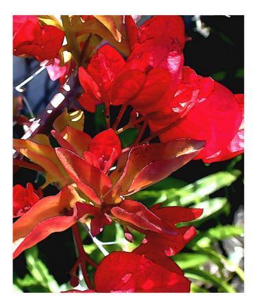 elaine-plesser-red-bouganvilla