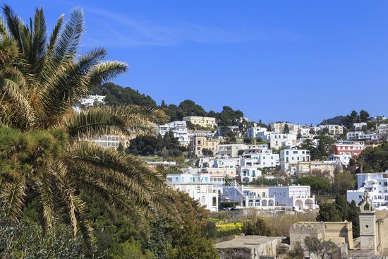 eleanor-scriven-palm-tree-and-certosa-di-san-giacomo-monastery-with-skyline-of-capri-town-capri-campania-italy