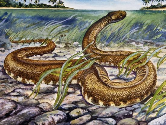 elephant-trunk-snake-acrochordus-javanicus-acrochordidae
