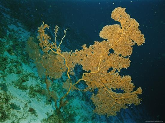 emory-kristof-corals-crowd-the-reefs-near-rongelap-atoll
