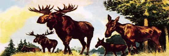 english-school-a-gang-of-elks