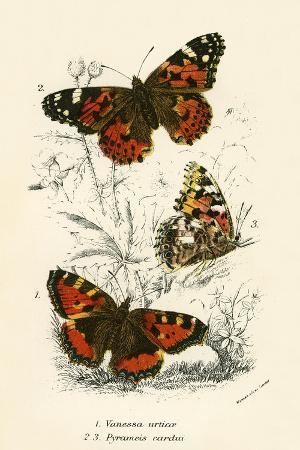 english-school-butterflies