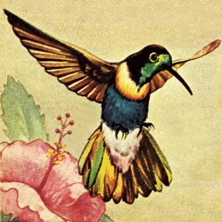 english-school-humming-bird