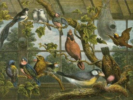 english-school-tropical-birds