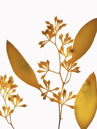 envision-yellow-eucalyptus