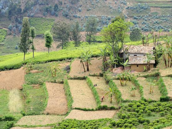eric-baccega-looking-down-on-terraced-farmland-and-traditional-house-rwanda-africa-2008