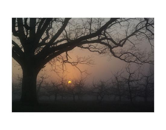 erik-richards-foggy-oak