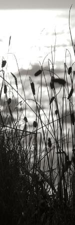 erin-berzel-coastal-grass-panel-ii