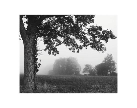 erin-clark-over-the-meadow