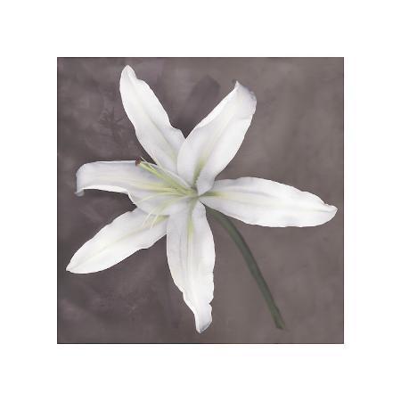 erin-clark-white-lily