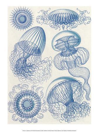 ernst-haeckel-art-forms-of-nature-leptomedusae