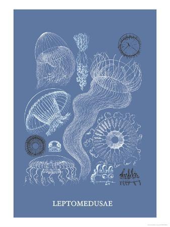 ernst-haeckel-jellyfish-leptomedusae