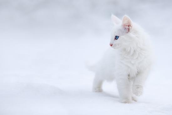 esmee-prexus-white-as-snow