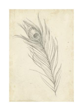 ethan-harper-peacock-feather-sketch-i