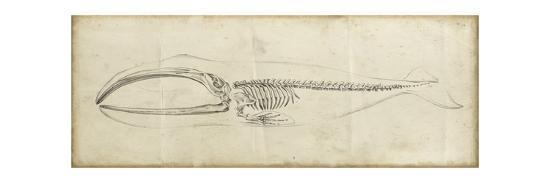 ethan-harper-whale-study-i
