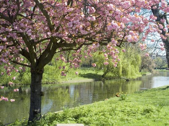 ethel-davies-blossom-regents-park-london-england-united-kingdom