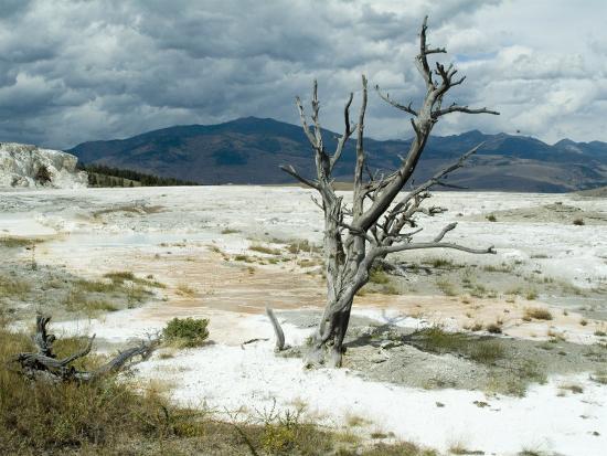 ethel-davies-mammoth-hot-springs-yellowstone-national-park-unesco-world-heritage-site-wyoming-usa