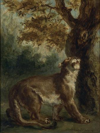 eugene-delacroix-le-puma-dit-aussi-lionne-guettant-une-proie