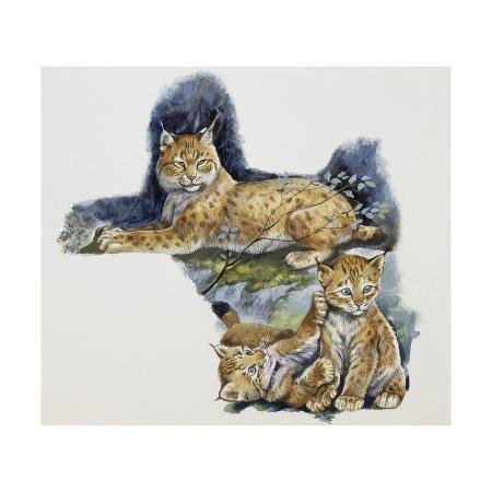 eurasian-lynx-female-lynx-lynx-and-her-cubs-felidae