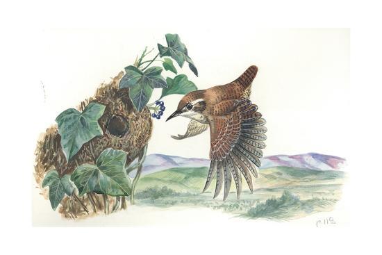eurasian-wren-troglodytes-troglodytes-at-nest