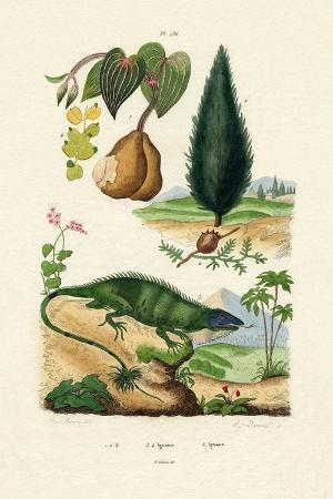european-yew-1833-39