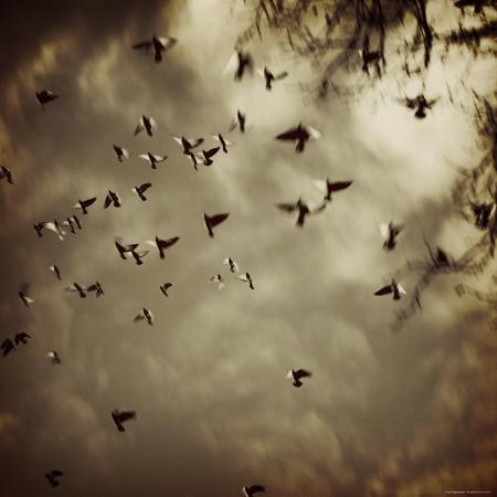 ewa-zauscinska-birds-flying-overhead