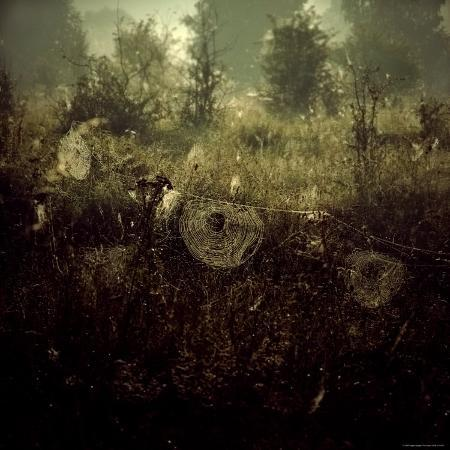 ewa-zauscinska-spiderwebs-in-field