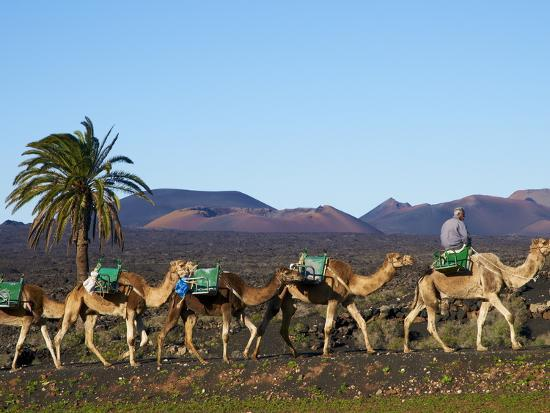excursion-by-camel-to-visit-volcano-national-park-of-timanfaya-lanzarote-canary-islands-spain