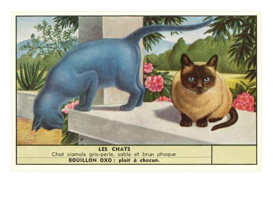 exotic-cats