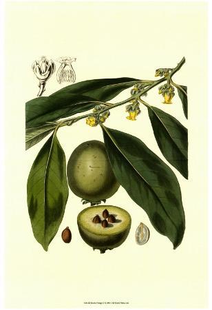 exotic-foliage-ii