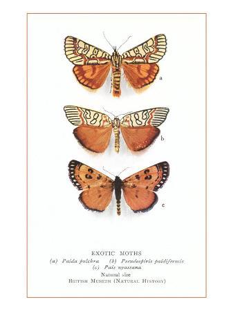 exotic-moths