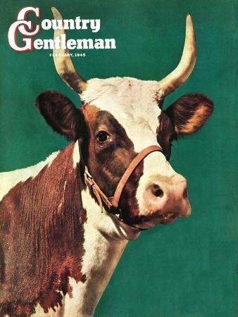 f-p-sherry-long-horned-cow-country-gentleman-cover-february-1-1945
