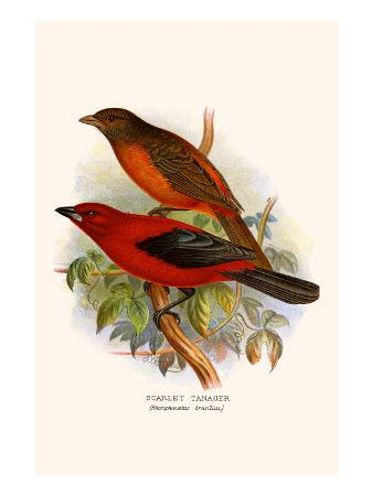 f-w-frohawk-scarlet-tanager