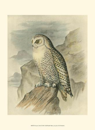 f-w-frohawk-snowy-owl