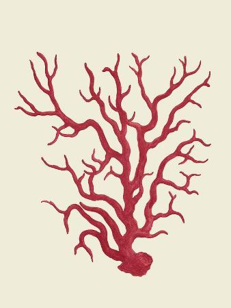 fab-funky-corals-coral-on-cream-a