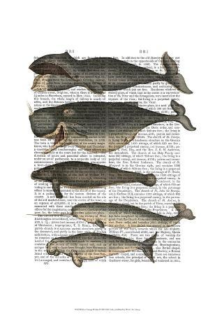 fab-funky-five-vintage-whales