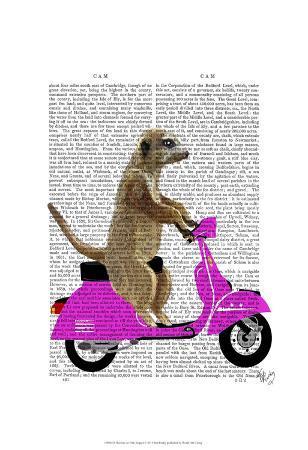 fab-funky-meerkat-on-pink-moped