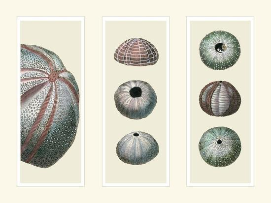 fab-funky-sea-urchins-on-3-panels