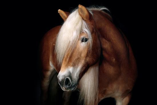 fabio-petroni-horse