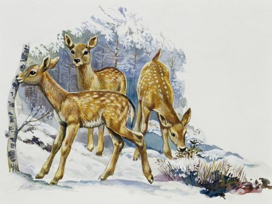 fallow-deer-fawns-dama-dama-cervidae
